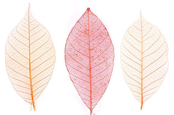clinicaslucq-especialidades-e.liquida-hojas-varices